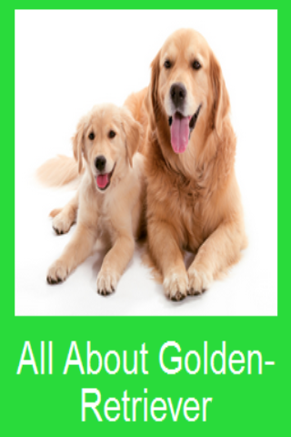 All About Golden-Retriever