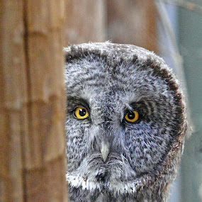 Peek a Boo by Steve S - Animals Birds