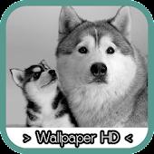 Siberian Husky Wallpapers