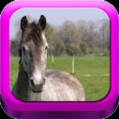 Good Horsemanship: Equestrian
