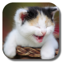 Funny Cat Live Wallpaper icon