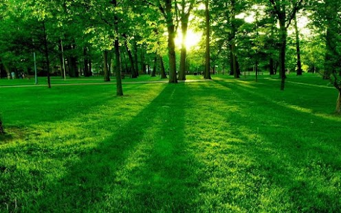 Green Nature HD Wallpaper Apk Download