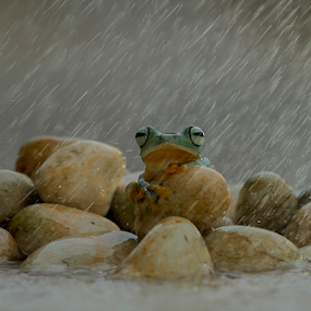 Rain.. by Ubayoedin As Syam - Animals Amphibians