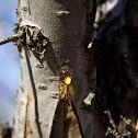 Tree sap (? tree)
