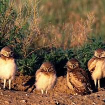 NWF: Watch for Wildlife!