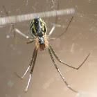 Filmy Dome Spider