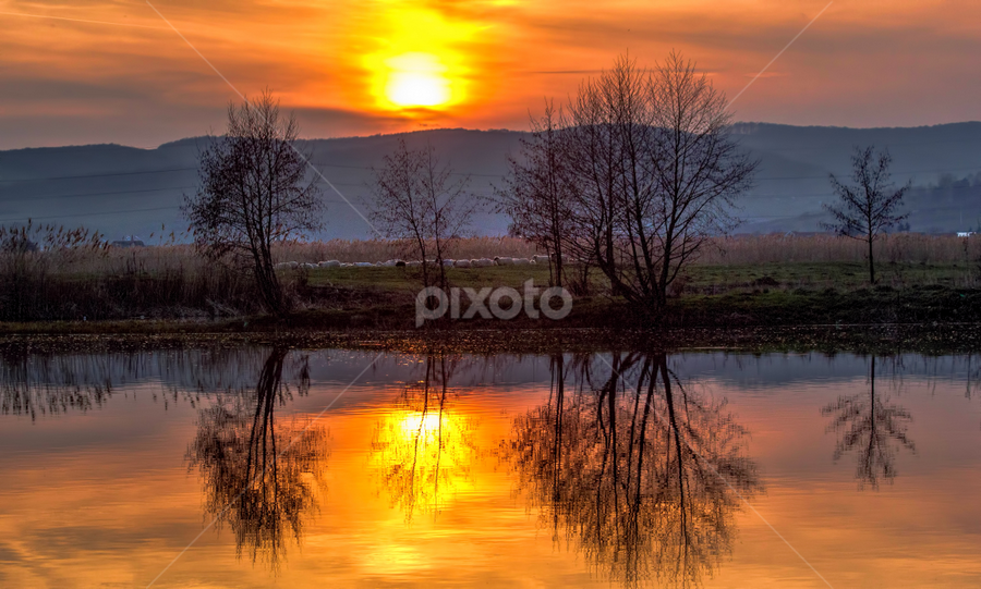 Sunset in Targu Mures by Hamos Gyozo - Landscapes Sunsets & Sunrises ( mirror, sunset, trees, sheep, sun, river, mures )
