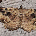 Barberry Geometer