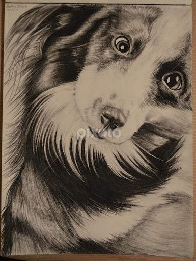 dog shaking all drawing drawing pixoto