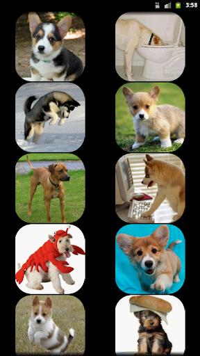 玩娛樂App|Dog Sounds免費|APP試玩