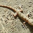 Bark Gecko