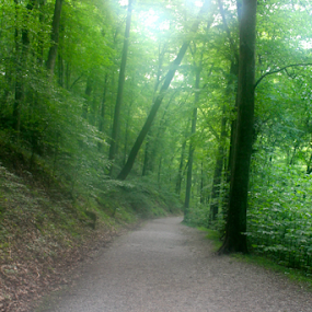 On the Way to the River Styx by J.c. Phelps - Landscapes Forests ( hiking path, green, path, trees, forest )