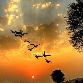 by Mukesh Chand Garg - Landscapes Travel ( wildlife photography, bird photos, bird and wildlife, photography, #garyfongdramaticlight, #wtfbobdavis, mukesh garg photography, nature, bird images, nature photography, focus, mukesh garg's photography, wildlife photos, bird photography, unlimited focus )