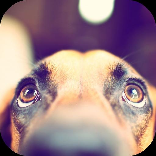 生活App|可愛的小狗壁紙 LOGO-3C達人阿輝的APP