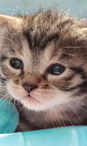 小小貓咪動態桌布