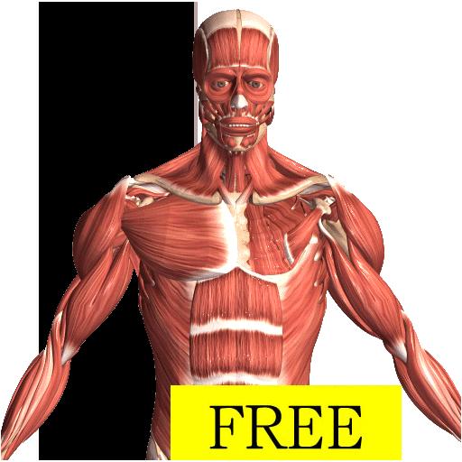 Visual Anatomy Free – Apps bei Google Play
