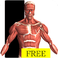 App Visual Anatomy Free version 2015 APK