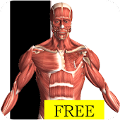Download Visual Anatomy Free APK to PC