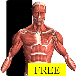 Visual Anatomy Free for Android