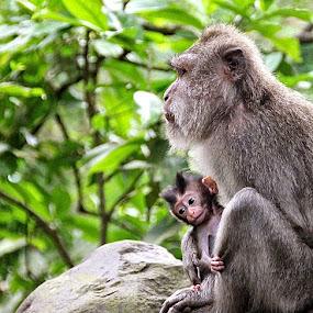 Just arrived by Cecilie Hansteensen - Animals Other ( animals, other, ape, mom, newborn, monkey,  )