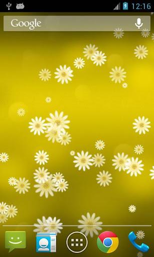 雛菊花動態桌布 Daisy Flower