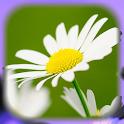 flowers wallpaper hd icon