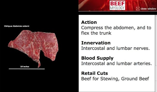 NU Beef Anatomy- screenshot thumbnail