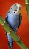 Screenshot of Parrot HD LWP Lite