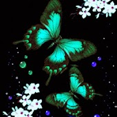 3D Butterfly 30