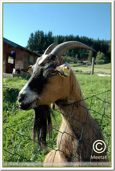 Austria_FarmhouseGoat framed