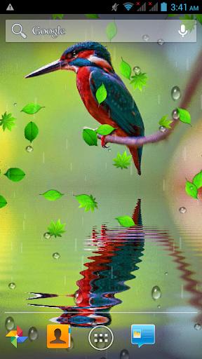 Bird Reflection Live Wallpaper