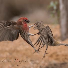 by Kelley Hurwitz Ahr - Typography Captioned Photos ( birds,  )