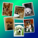 Puppy Widget Free icon