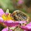 Blossom feeder