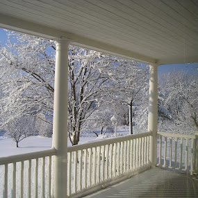 by Wendy Schultz - Nature Up Close Trees & Bushes ( , snow, winter, cold )