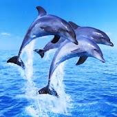 3D Dolphin 010