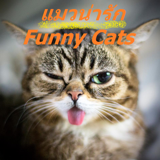 FunnyCats video เเมวน่ารัก