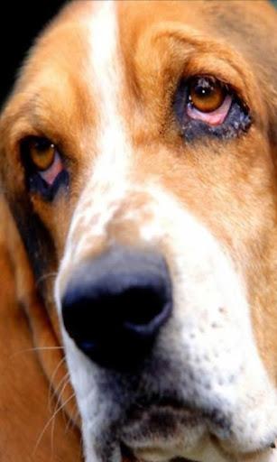 壁紙甜蜜的狗