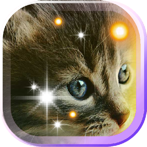 Pet Kittens HD Live Wallpaper LOGO-APP點子