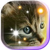 Pet Kittens HD Live Wallpaper