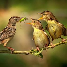 Feed the kids by Husada Loy - Animals Birds (  )