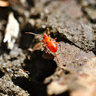 Red bug!