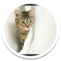 My Photo Wall Kitty cat LWP icon