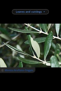 Olive Oil IQ - screenshot thumbnail