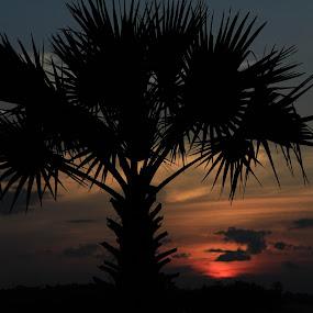 sunset by Prakash Prem - Landscapes Sunsets & Sunrises