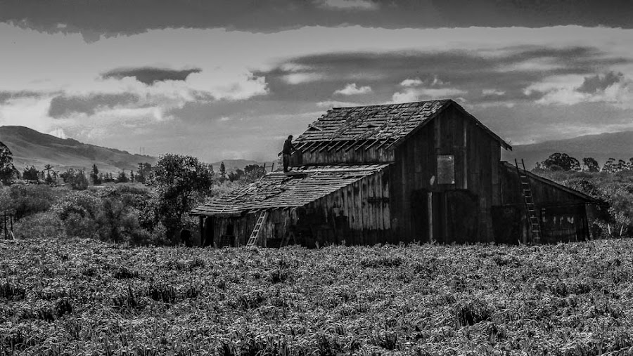 Men at Work by Laura Robles - Black & White Buildings & Architecture ( roof, mountains, barn, california, agriculture, landscape,  )