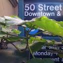 insistent plant