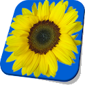 Sunflower Live Wallpaper Free icon