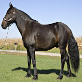 Top 20 Horse Breeds 1 FREE