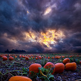 Halloween is Near by Phil Koch - Landscapes Prairies, Meadows & Fields ( vertical, photograph, fine art, yellow, travel, leaves, halloween, love, sky, tree, nature, autumn, flowers, flower, orange, pumpkin, twilight, agriculture, horizon, portrait, environment, dawn, season, serene, outdoors, trees, floral, inspirational, natural light, wisconsin, ray, landscape, phil koch, spring, sun, photography, blue sky, horizons, inspired, office, clouds, park, green, pumpkins, back light, scenic, morning, farming, shadows, wild flowers, field, red, color, blue, sunset, peace, fall, meadow, landscapephotography, beam, earth, sunrise, landscapes, patch, mist, , colorful )